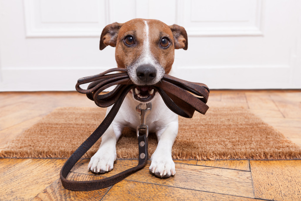 puppy with leash collar