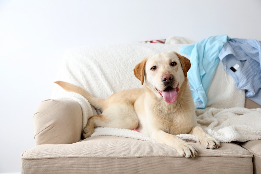 dog on the couch